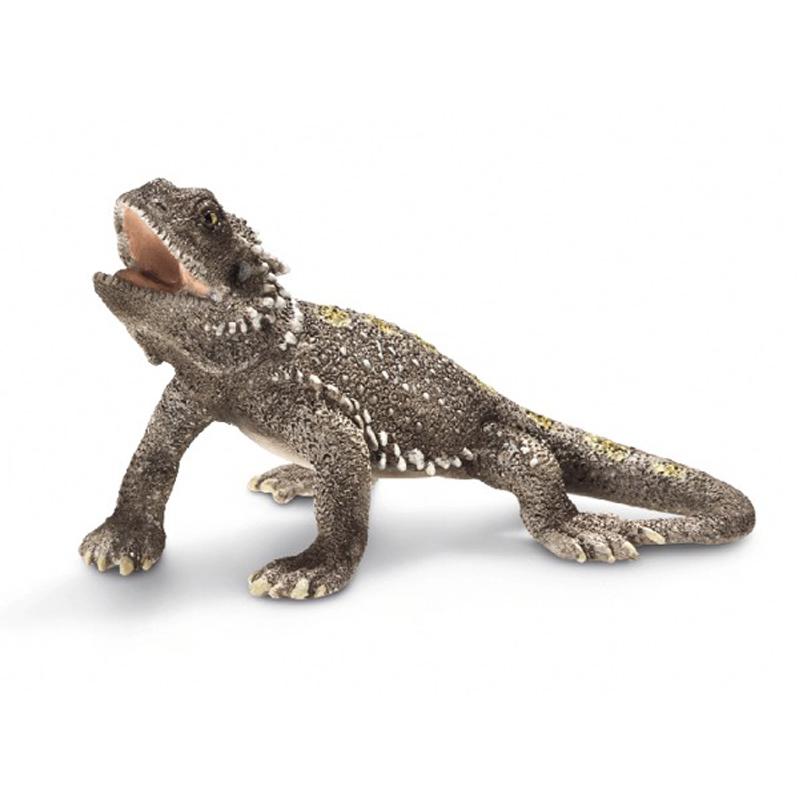 Pogona Lizard from Sch...